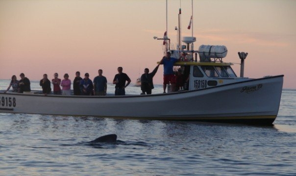 At Sunset Barry Doucette's Deep Sea Fishing